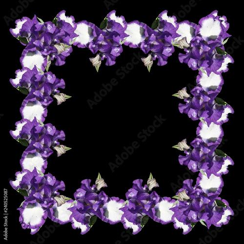 Beautiful pattern of blue irises