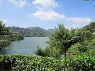 Fototapeta na wymiar lake in deep forest