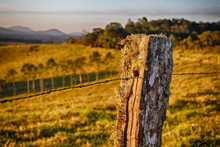 A Lichen Covered Fence Post Catches The Sun At The End Of The Day.