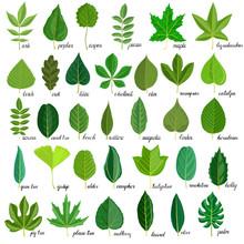 Vector Set Of Tree Leaves