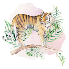 Watercolor Tiger Illustration ...