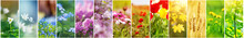 Beautiful Collage Of Flowers O...