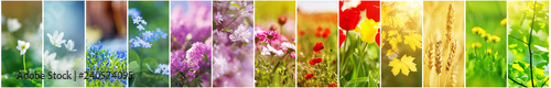 Beautiful collage of flowers on the field