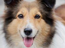 Headshot Portrait Of A Cute Sh...