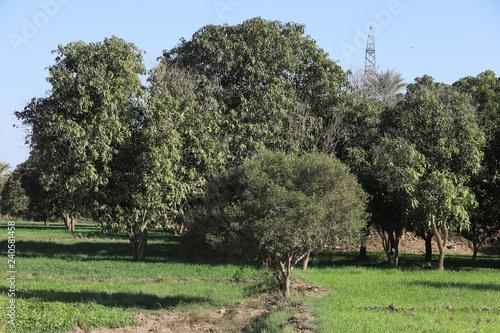Photo  Plantations and trees