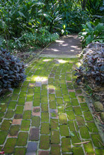 A Moss Covered Pathway In A Manicured Garden