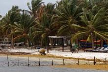 Czyszczeni Karaibskiej Plaży ...