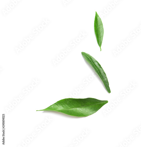 Composition with fresh green tangerine leaves and space for text on white background, top view