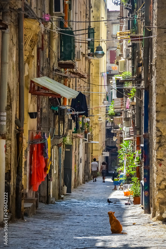 Spoed Foto op Canvas Smal steegje Empty street at the city of Naples, Italy