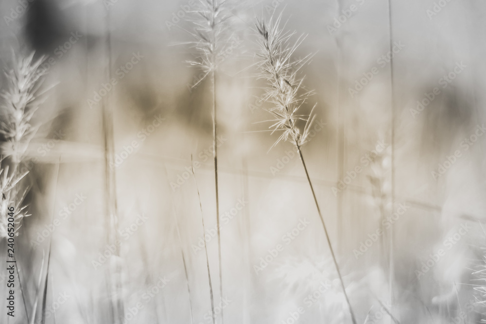 Fototapety, obrazy: vintage background little flowers, nature beautiful, toning design spring nature wild flowers background
