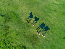 Top View Of Grazing Horses In ...