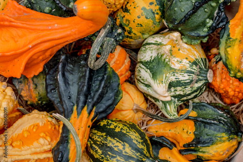 Beautiful autumn still life of vegetables with pumpkins.