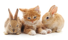 Kitten And Rabbits.