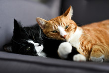 Two Cats Cuddling Together On A Chair At Home.