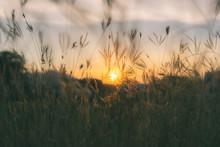 Prairie Grasses Silhouette