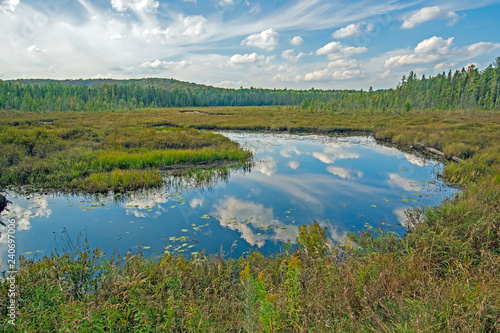 Printed kitchen splashbacks Blue Reflections on a Wetland Pond