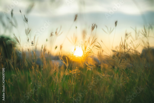 Photo sur Toile Beige Prairie grasses twilight
