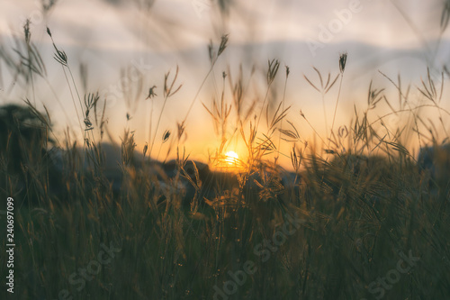 Poster Beige Prairie grasses silhouette
