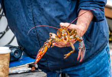 Maine Lobster Boat Demo, How-t...