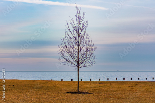 Fotografie, Obraz  Single Bare Tree along the Shore of Lake Michigan in Chicago during Winter