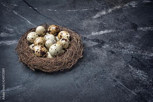 Bird nest with small quail eggs