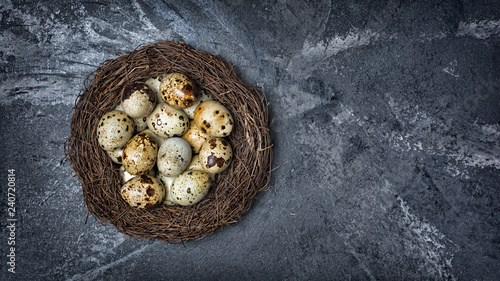 Top view on bird nest with small quail eggs