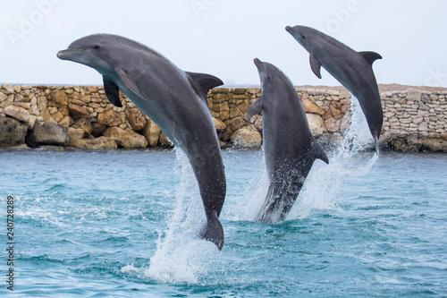 Drei Delfine machen gemeinsamen Luftsprung