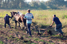 Peasants Plow The Field With Horses