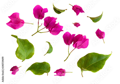 Stampa su Tela Set of bougainvillea flowers and leaves