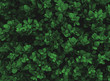 leaves pattern texture background green color, Natural background closeup