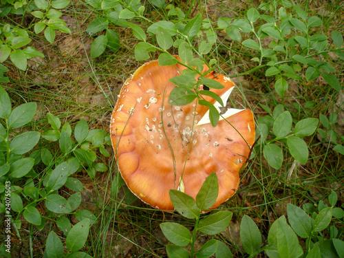 Fotografie, Obraz  fungus on the floor