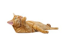 Cute Ginger Cat Lying Down. Side View Isolated On White With Copy Space.