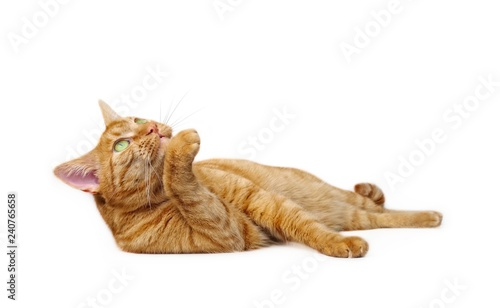 Fotografia Cute ginger cat lying down