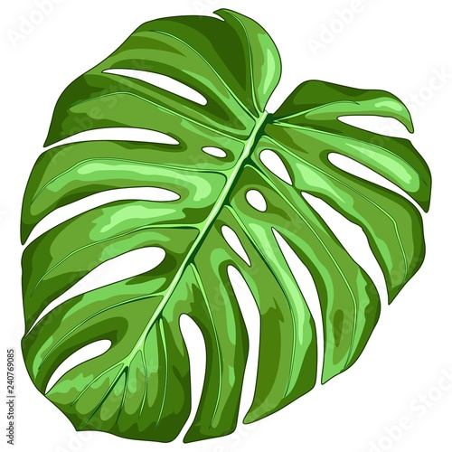 Tuinposter Draw Monstera Leaf Tropical Plant Vector Illustration