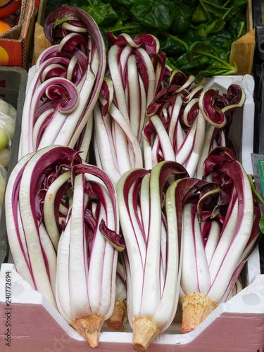 Treviso IGP tardive red radicchio delicious winter salad