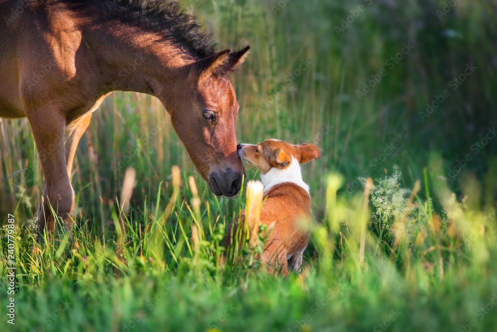 Horse play with dog outdoor free