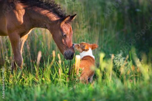 Fototapeta Horse play with dog outdoor free obraz