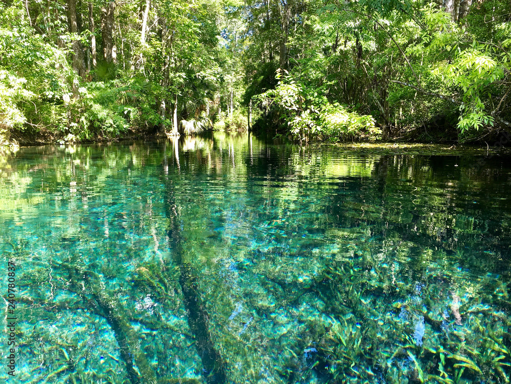 Fototapety, obrazy: Florida, USA - July 31, 2018: America's largest spring sits untouched within Silver Springs State Park