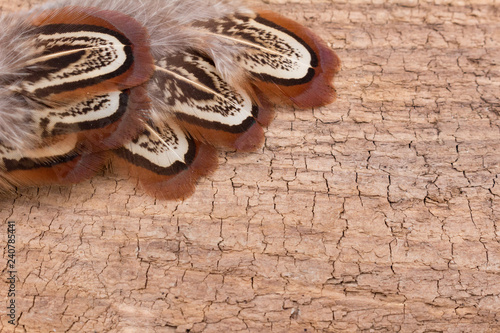 Photo  Feathers on Wood with Room for Text
