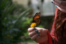 An Orange, Black And White Butterfly On A Flower In A Lady's Hand