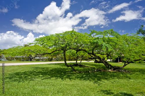 In de dag Verenigde Staten Fairchild tropical botanic garden, FL, USA