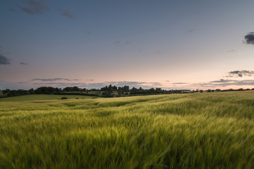 Beautiful Grass Meadow At Sunset