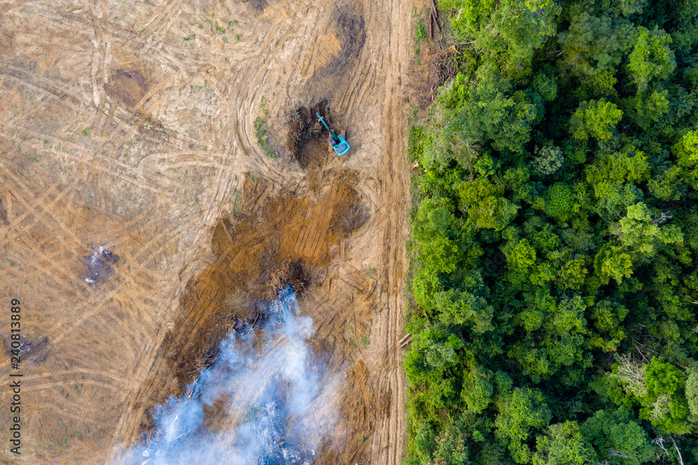 Fototapeta Aerial view of deforestation.  Rainforest being removed to make way for palm oil and rubber plantations