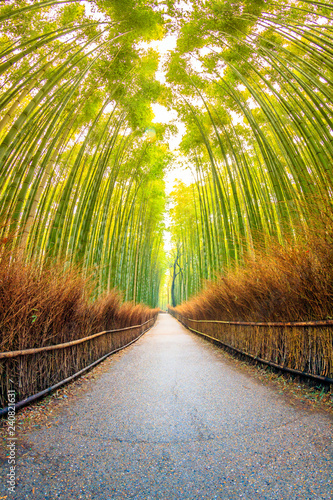 Poster Lieu connus d Asie Pathway through Bamboo forest in Kyoto, where is the landmark of Japan