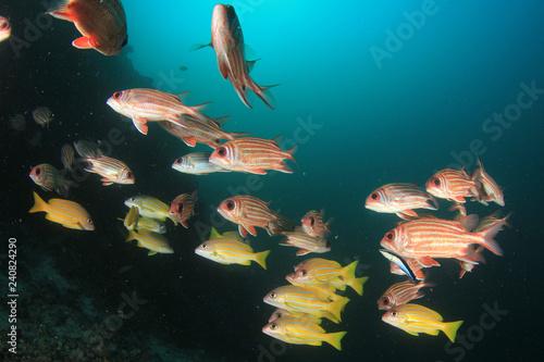 Obraz na dibondzie (fotoboard) Ryba na rafie koralowej