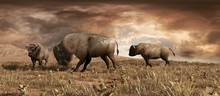 Buffaloes On The Prairie