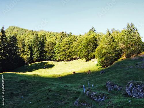 Foto auf Gartenposter Forest river Subalpine forests in the Ostschweiz region - Canton of Appenzell Ausserrhoden, Switzerland