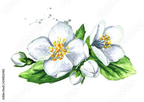 Obraz na plátně White jasmine flowers