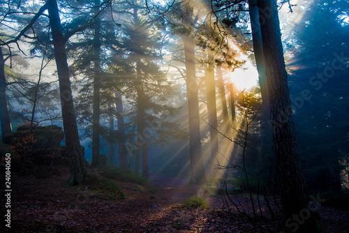 Promienie słoneczne penetrują mgłę w lesie Wogezów