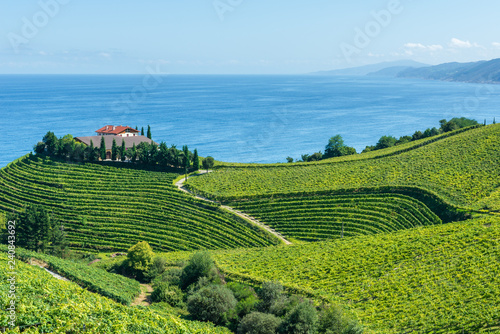 Fotografia  Txakoli vineyards with Cantabrian sea in the background, Getaria in Basque Count
